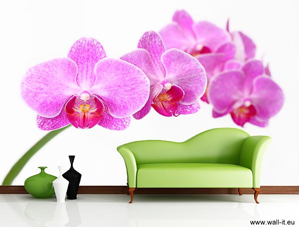 Fototapeta z orchideą